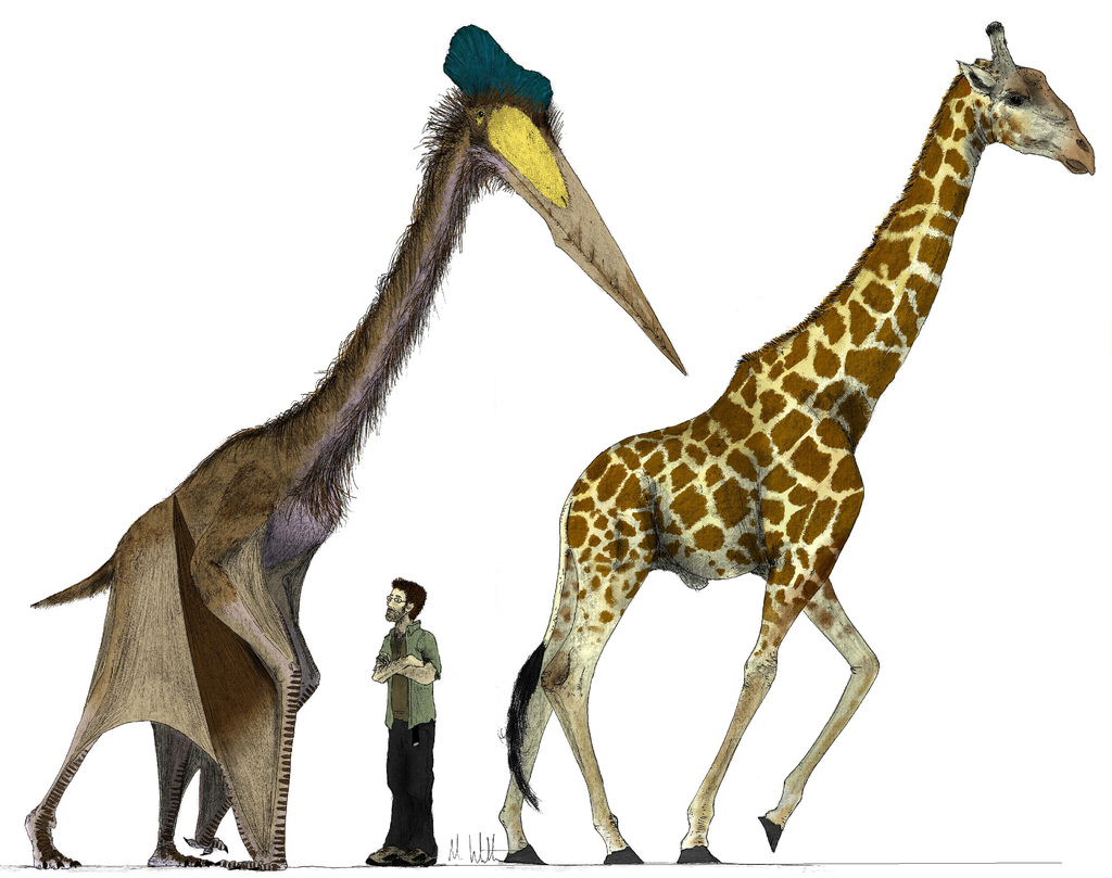 how a bulked-up Quetzalcoatlus would compare to a giraffe
